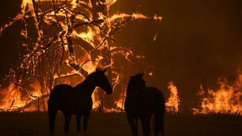 Australian Wildfires Intensify To The Point Of Extinction Of Animals?